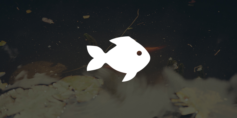 website-fish.jpg